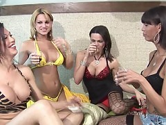 Shemales in lingerie drinking wine