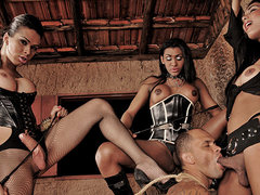 3 kinky ts dommes punish a guy