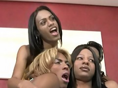 Sexy black T-girls have wild orgy
